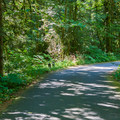 Paved road through Money Creek Campground.- Money Creek Campground