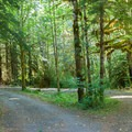 Lush green woods.- Miller River Group Campground