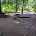 Typical campsite at Salmon la Sac Campground.- Salmon la Sac Campground