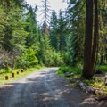 Road through the campground. - Cayuse Horse Campground