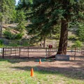 Sixteen separate horse corrals.- Cayuse Horse Campground