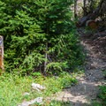 Horse trail leading from the campground to Salmon la Sac Trailhead.- Cayuse Horse Campground