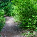 Trail to campsites.- Owhi Campground