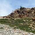 Alpine meadow with rock features.- Ingalls Peak