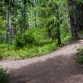 Gentle trail.- Cooper Lake