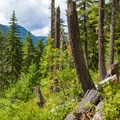The trail to Cooper Lake.- Cooper Lake