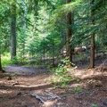 Walk through dense forest next to the river.- Cooper Lake