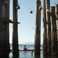 Bird nests hang from logs at the put-in near Golden Gardens Park.- Golden Gardens to West Point Lighthouse Sea Kayaking