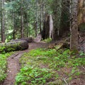 Trail through the woods down to the lake.- Josephine Lake