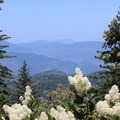 Pass through a tunnel of trees and flowers just before reaching the summit.- Mount Saint Helena