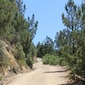 Most of the hike is on an old logging road that winds up the southern side of the mountain.- Mount Saint Helena