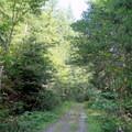The Beckler Peak Trail begins on decommissioned logging road.- Beckler Peak Trail