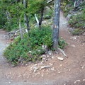 A bend in the Thunder Knob Trail.- Thunder Knob