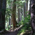 The trail switchbacks for 1.5 miles through an old-growth forest.- Beckler Peak Trail
