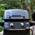 A raven at Colonial Creek Campground.- Colonial Creek Campground