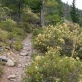 The Bear Point trail crosses lush, beautiful meadows with nice views.- Bear Point
