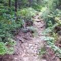 Tall shrubs line the trail.- Bear Point