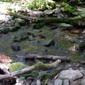 There are a few small creeks that flow across the trail.- Bear Point