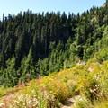 Lake Ann Trail.- Lake Ann via Maple Pass Loop