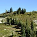 Maple Pass trail along a shoulder of Frisco Mountain.- Maple Pass Loop Hike