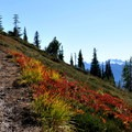Late summer colors along the trail.- Maple Pass Loop Hike