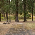 Typical campsite at Ukiah-Dale Forest State Park Campground.- Ukiah-Dale Forest State Park Campground