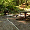 Typical walk-in site near the Skagit River.- Newhalem Creek Campground