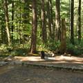 Typical site in Loop C.- Newhalem Creek Campground