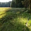 This wet meadow is at the junction to Found Lake.- The Twins Loop
