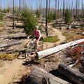 An exposed section of the Waldo Lake Trail.- Waldo Lake Trail