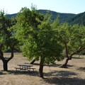 Picnic table in the fruit orchard in Fort Hoskins Historic Park.- Fort Hoskins Historic Park