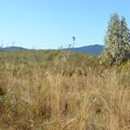View of the Coast Range from the Jackson-Frazier Wetland.- Jackson-Frazier Wetland