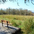 Viewpoint along the path in the Jackson-Frazier Wetland. - Jackson-Frazier Wetland