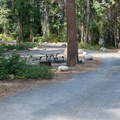 Road through the campground.- Lake Wenatchee State Park South Campground