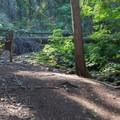 Alternate trail to Hidden lake.- Glacier View Campground, Lake Wenatchee