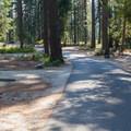 Road through Lake Wenatchee State Park North Campground.- Lake Wenatchee State Park North Campground
