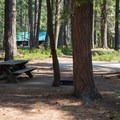 Typical campsite at Lake Wenatchee State Park North Campground.- Lake Wenatchee State Park North Campground