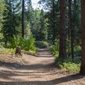 Trail to the lake.- Lake Wenatchee State Park North Campground