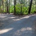 Road through campground.- Nason Creek Campground