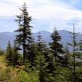 The trail leads along a ridge.- Beckler Peak Trail