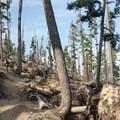 Walking through a microburst area of the trail.- Mount Thielsen