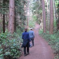 Hiking through the woods of Sucia Island.- Sucia Island Hiking Trail System