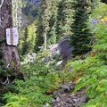 Entering the Alpine Lakes Wilderness.- Commonwealth Basin Trail to Red Pass