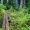 A log bridge over a small stream on the Commonwealth Basin Trail.- Commonwealth Basin Trail to Red Pass