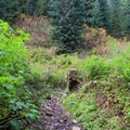 The trail opens into a valley after 4 miles.- Commonwealth Basin Trail to Red Pass