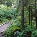 Well-maintained trail.- Commonwealth Basin Trail to Red Pass