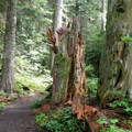 The route to Commonwealth Basin starts on the Pacific Crest Trail.- Commonwealth Basin Trail to Red Pass