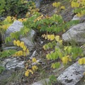 Fall color highlights the underbrush along the trail in September.- Alpine Lake + Baron Divide