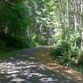 "Trail through L.L. ""Stub"" Stewart State Park.- Banks-Vernonia Trail"