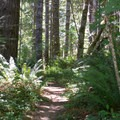 One of a few unpaved trails that depart from the main paved trail.- Banks-Vernonia Trail